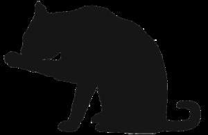 digital-marketing-cat
